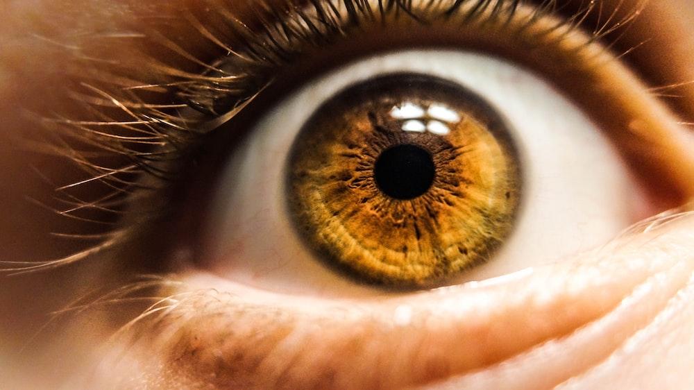 茶色の目をした人間