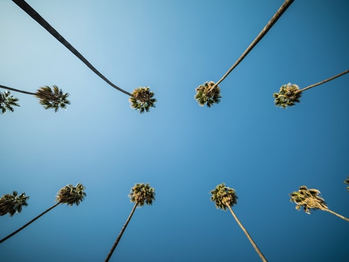 Los Angeles Activity List