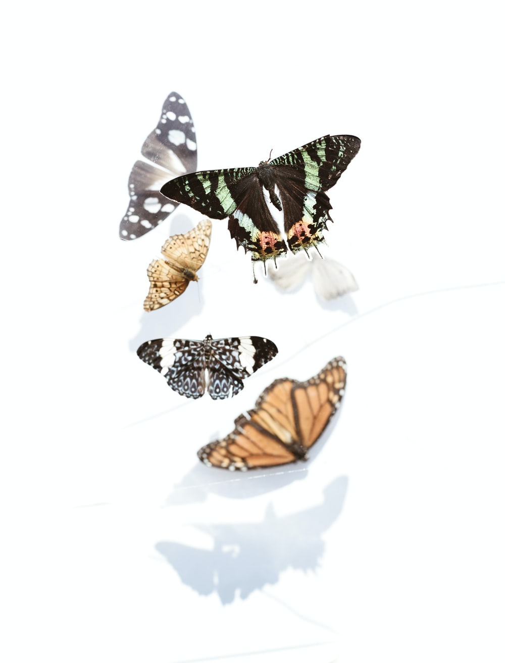 five assorted butterflies