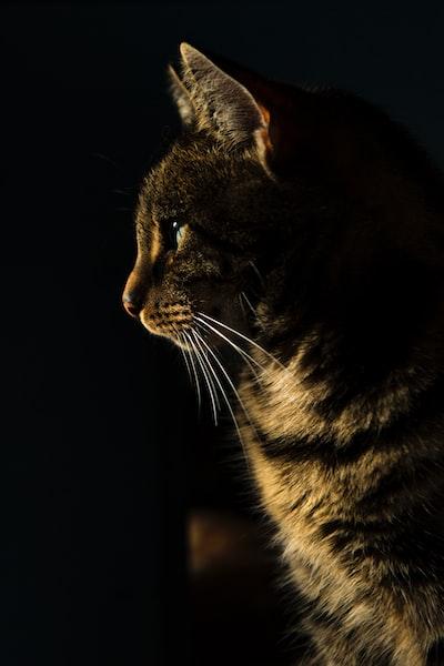 kot-w-ciemnosci