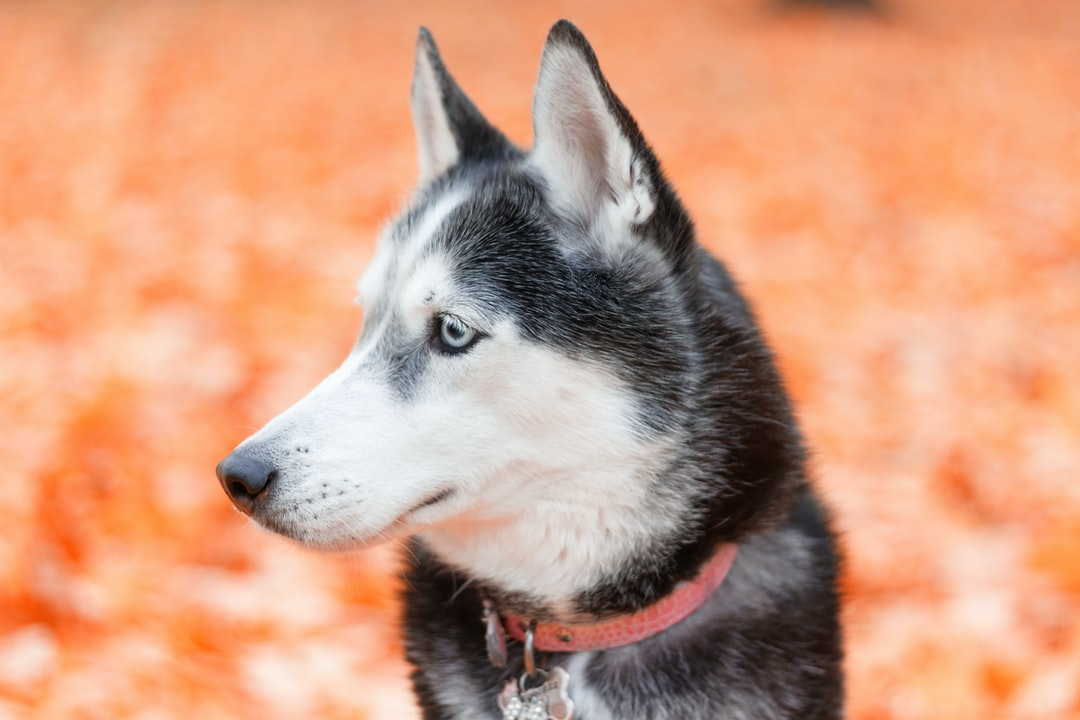 How to find a psychiatric service dog | Policygenius