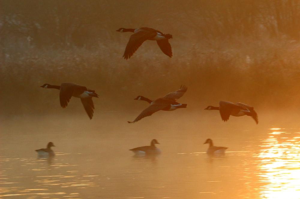 flight of birds above body of water