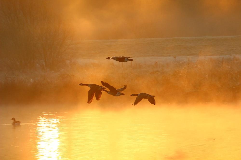 birds in flight over body of water