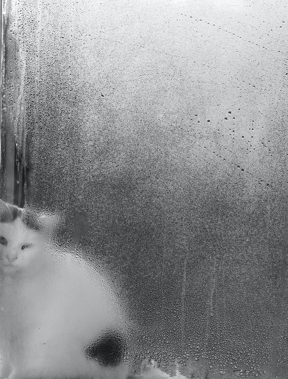 short-fur white and black kitten