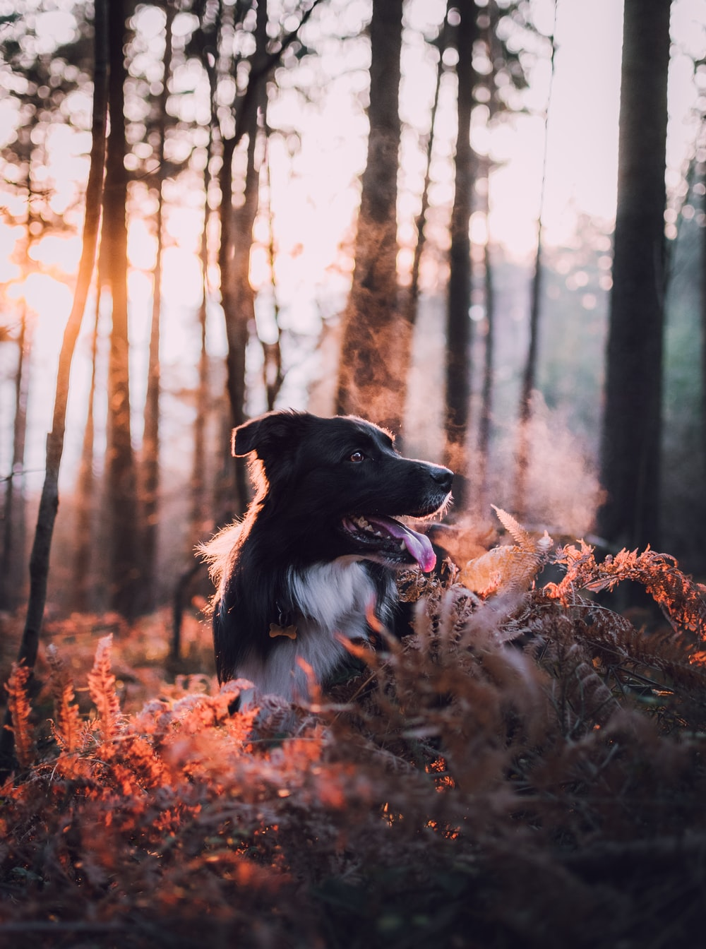 adult white and black border collie outdoor during daytime