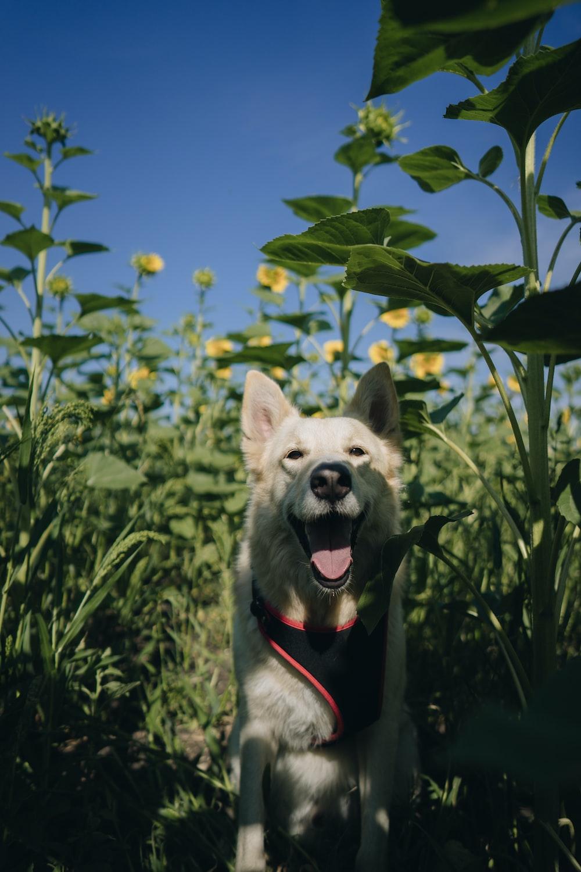 short-coated white dog inside flower garden