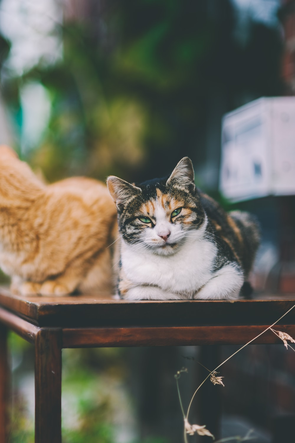 two cats on table