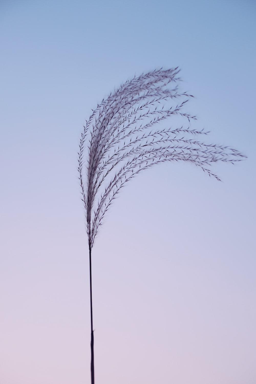black tree plant during daytime