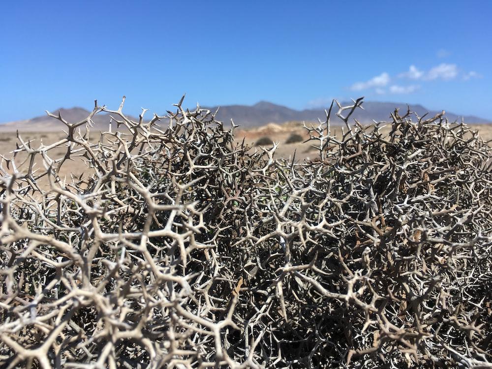 tree branches on desert