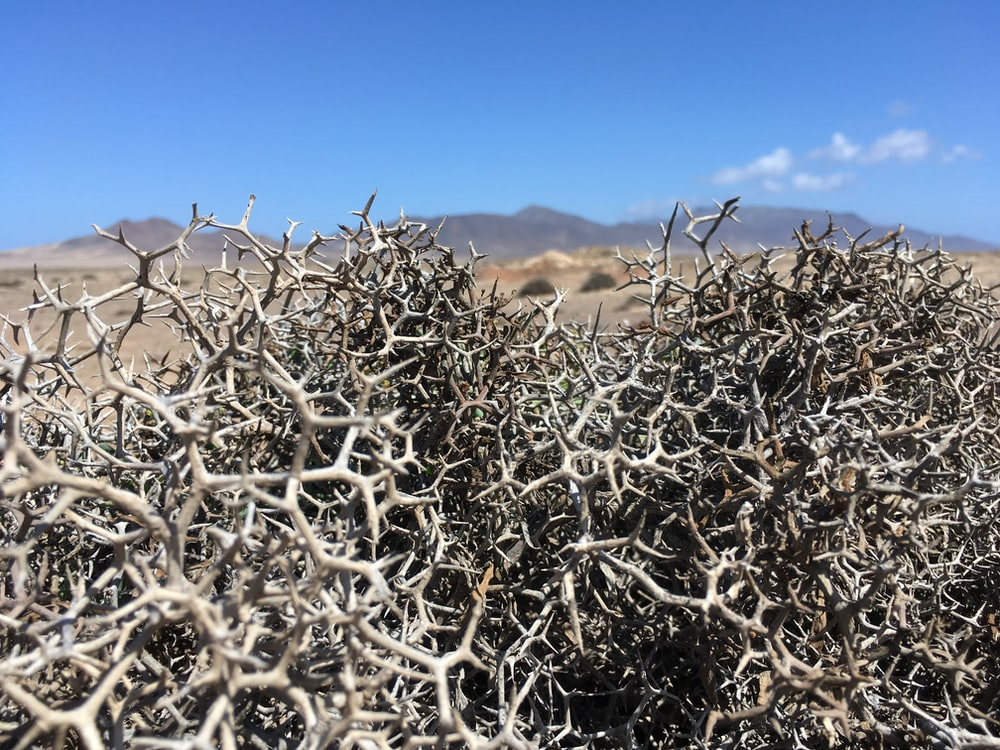 tree branches on desert