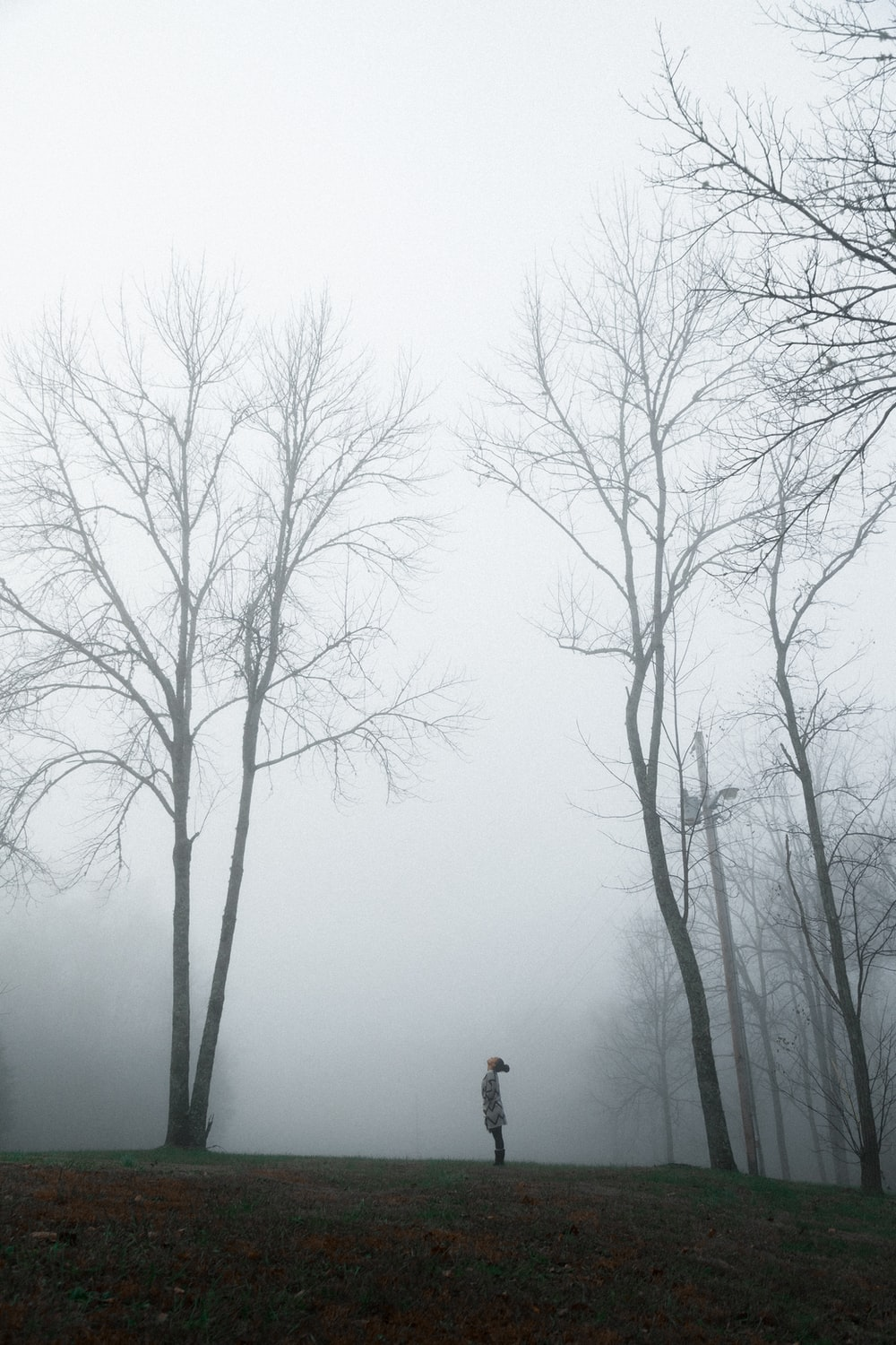person in a foggy forest