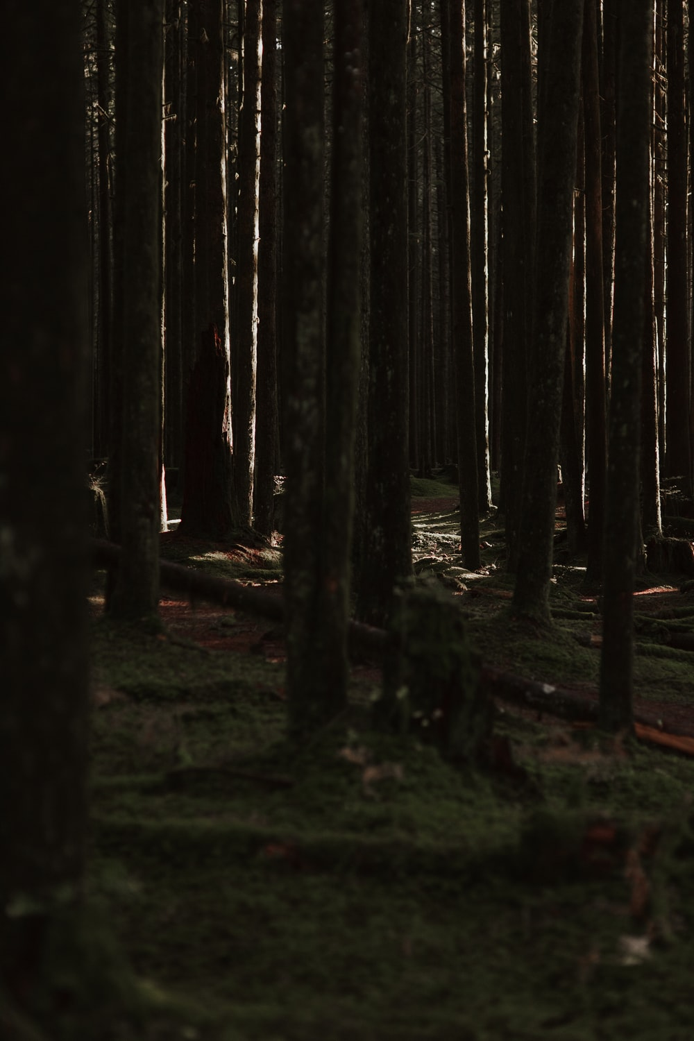 tall trees in forest during daytime