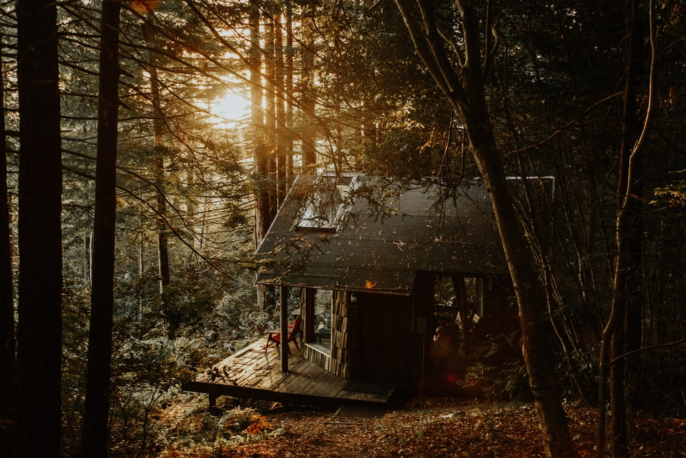 gray wooden house in forest