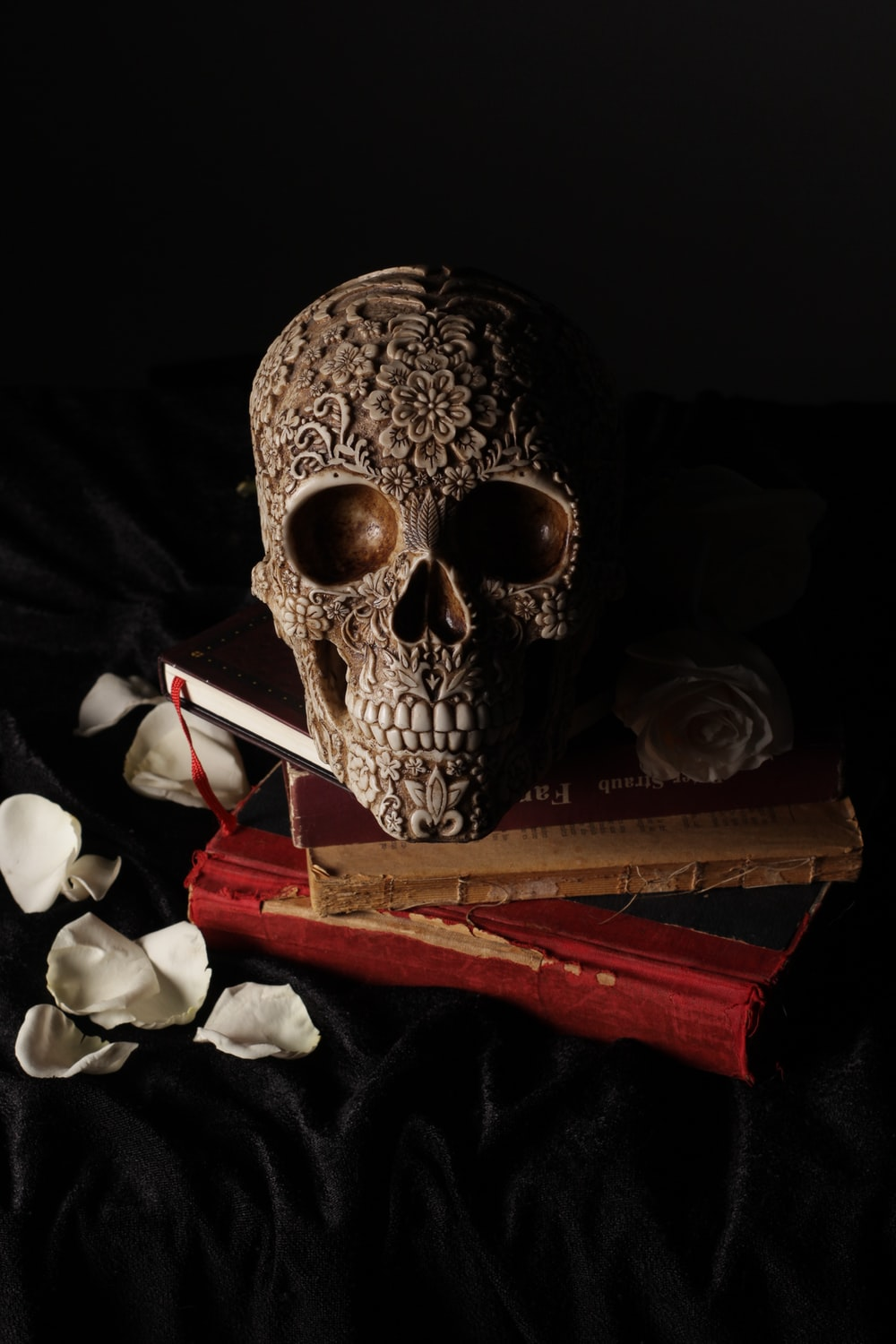gray skull on top of brown book
