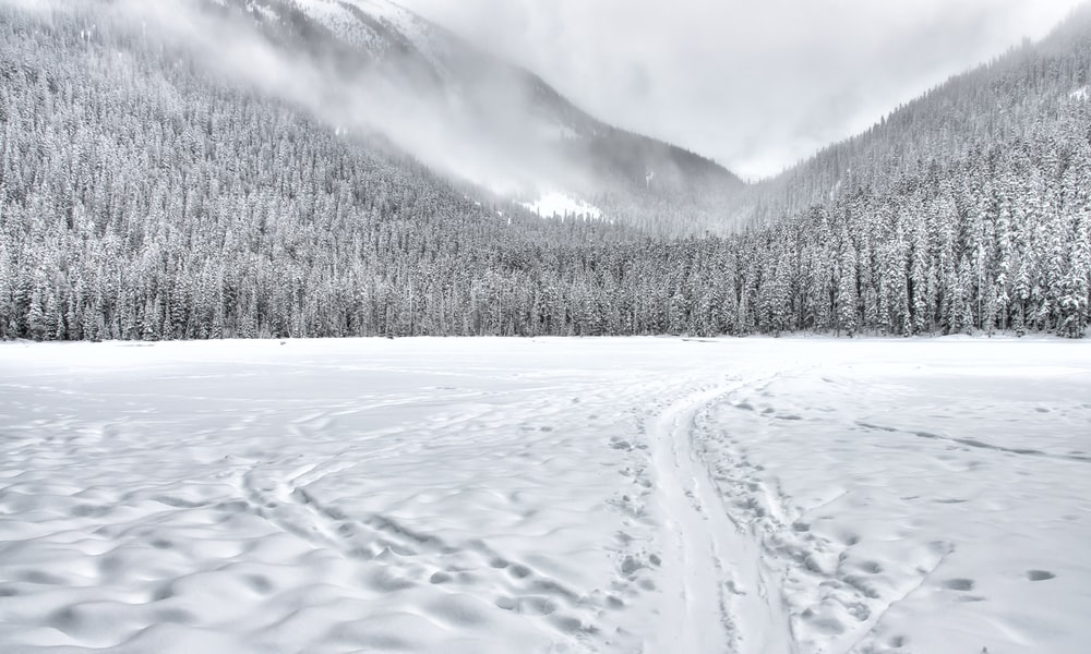 snowy field and forest