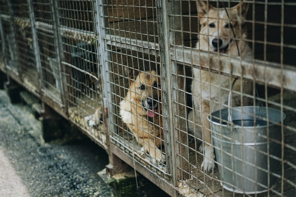 dogs inside cages