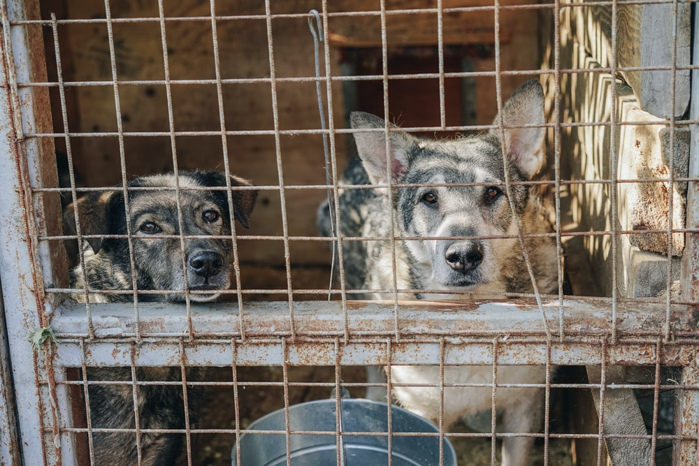 two dogs in cage during daytime