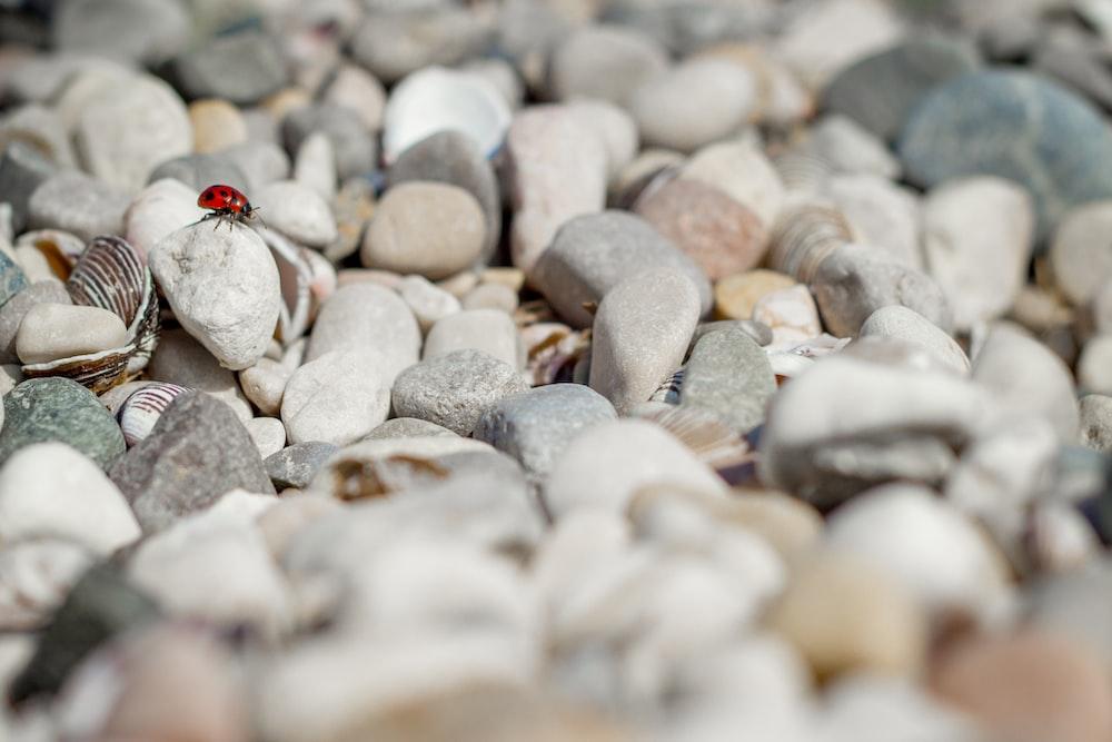 ladybug on stone