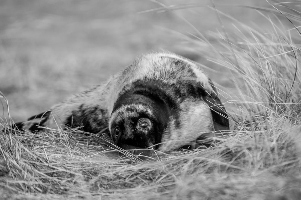grayscale photo of animal on grass