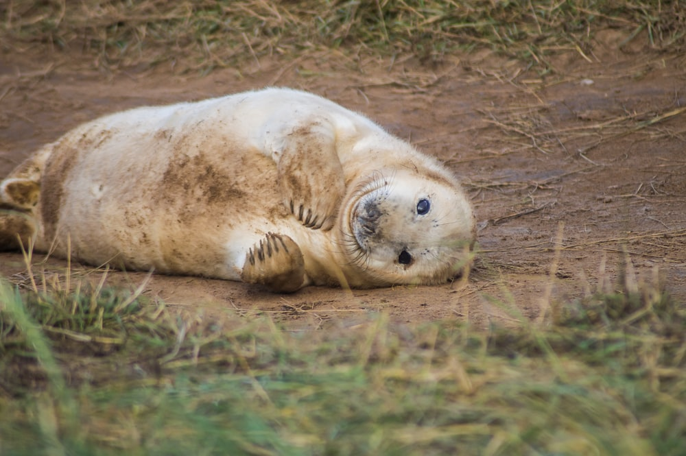 selective focus photo of seal