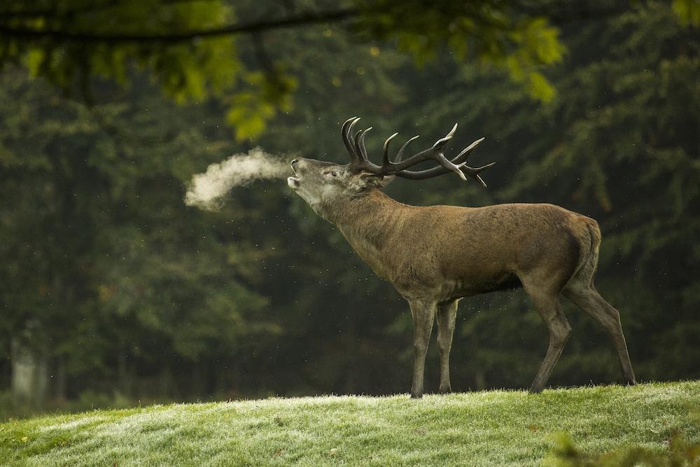 closeup photography of reindeer during daytime