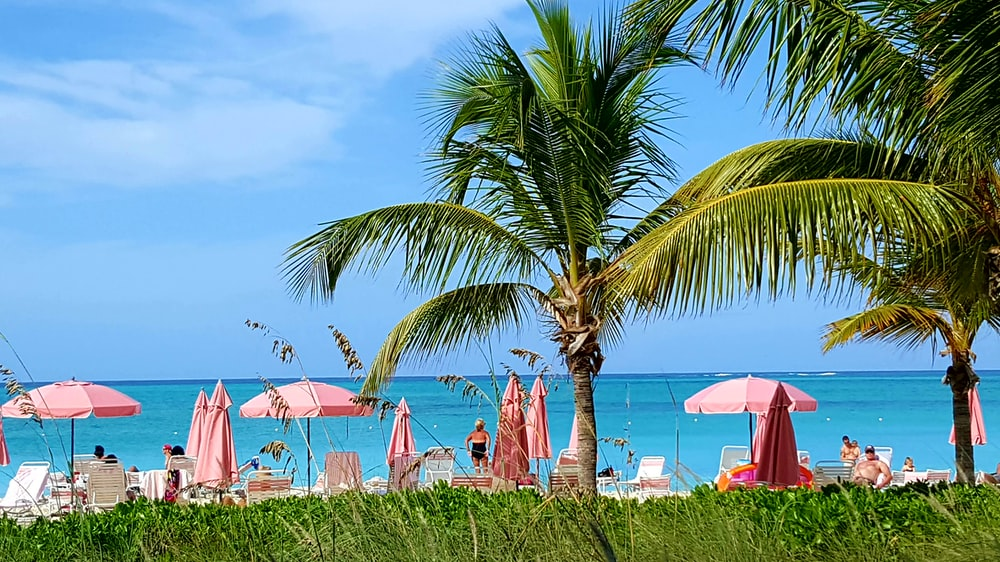 green palm tree near seashore