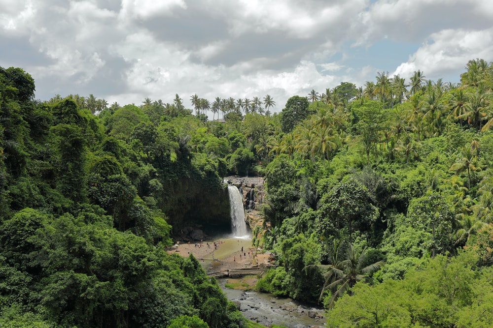 landscape photography of trees and water falls