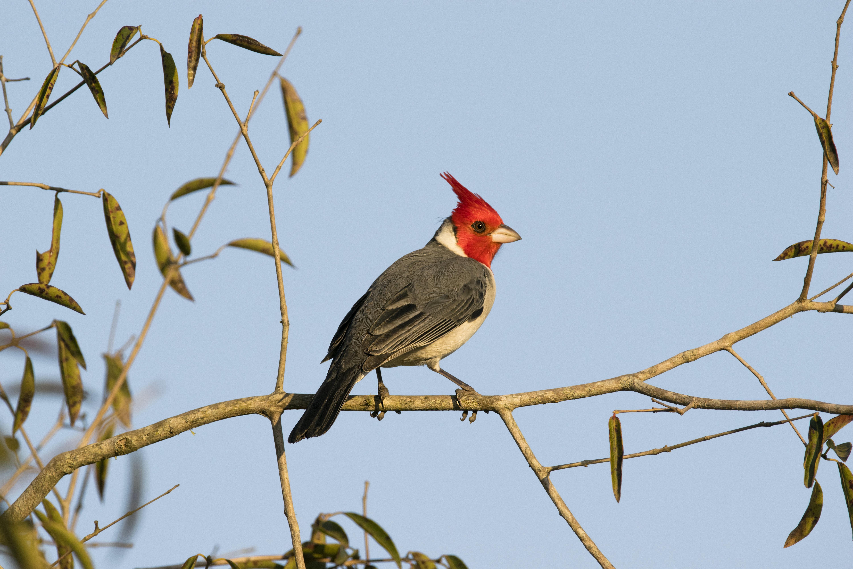 bird perching on tree branch