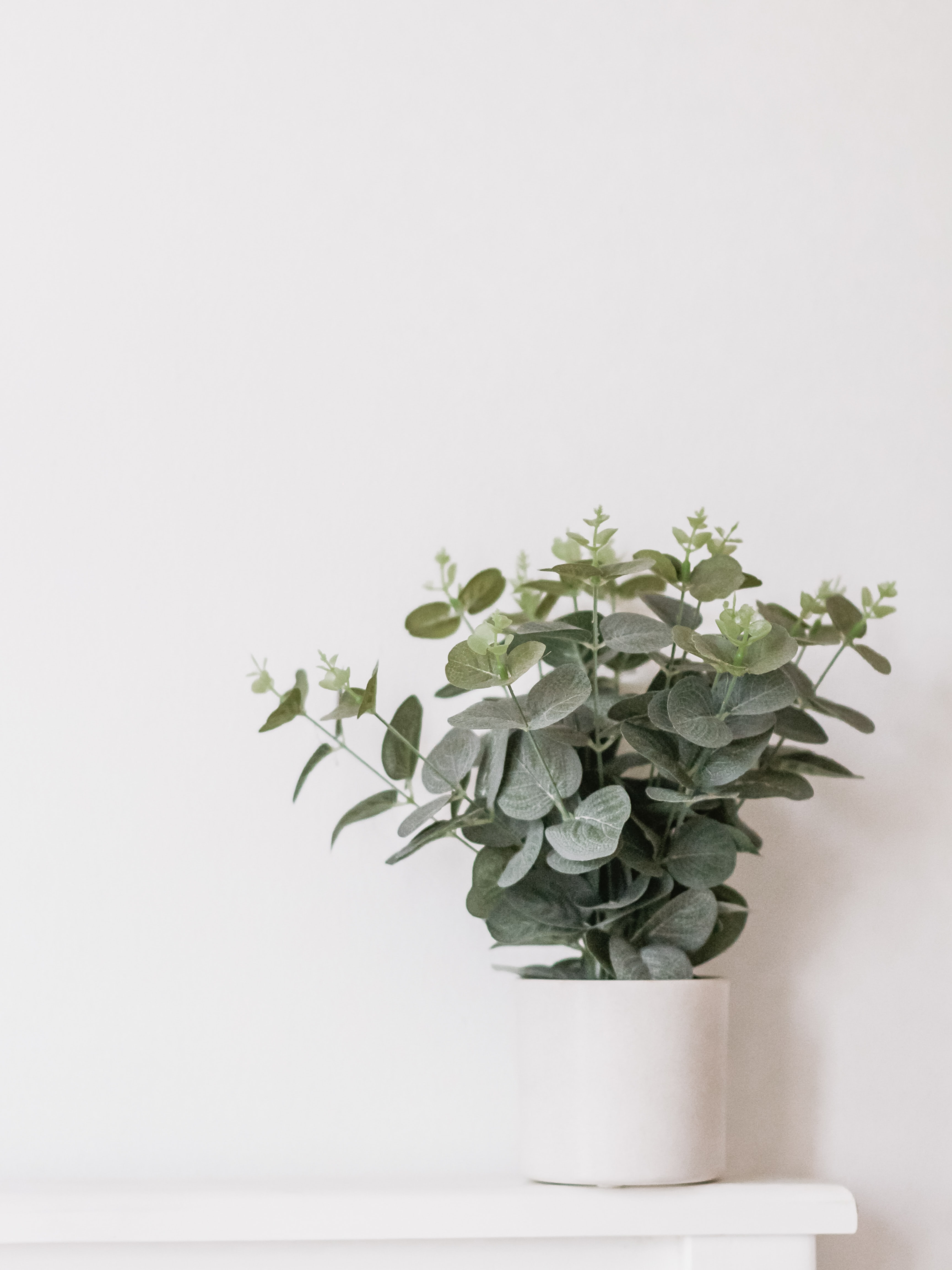 green leaf plant in white pot