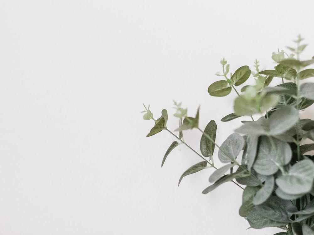 Yaprak Biti Nedir?
