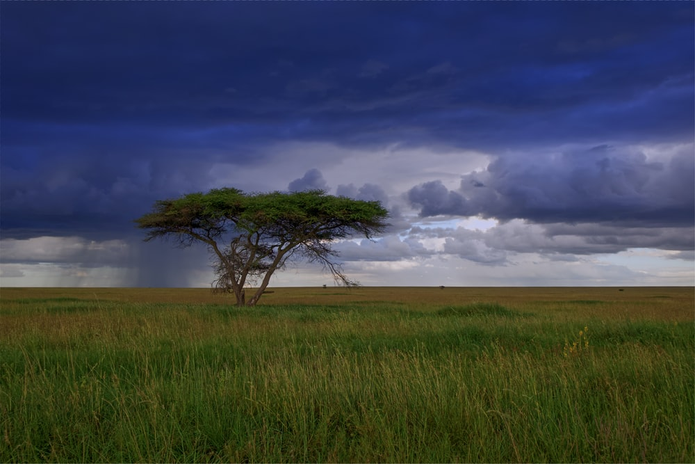 landscape photography of tree in grass field