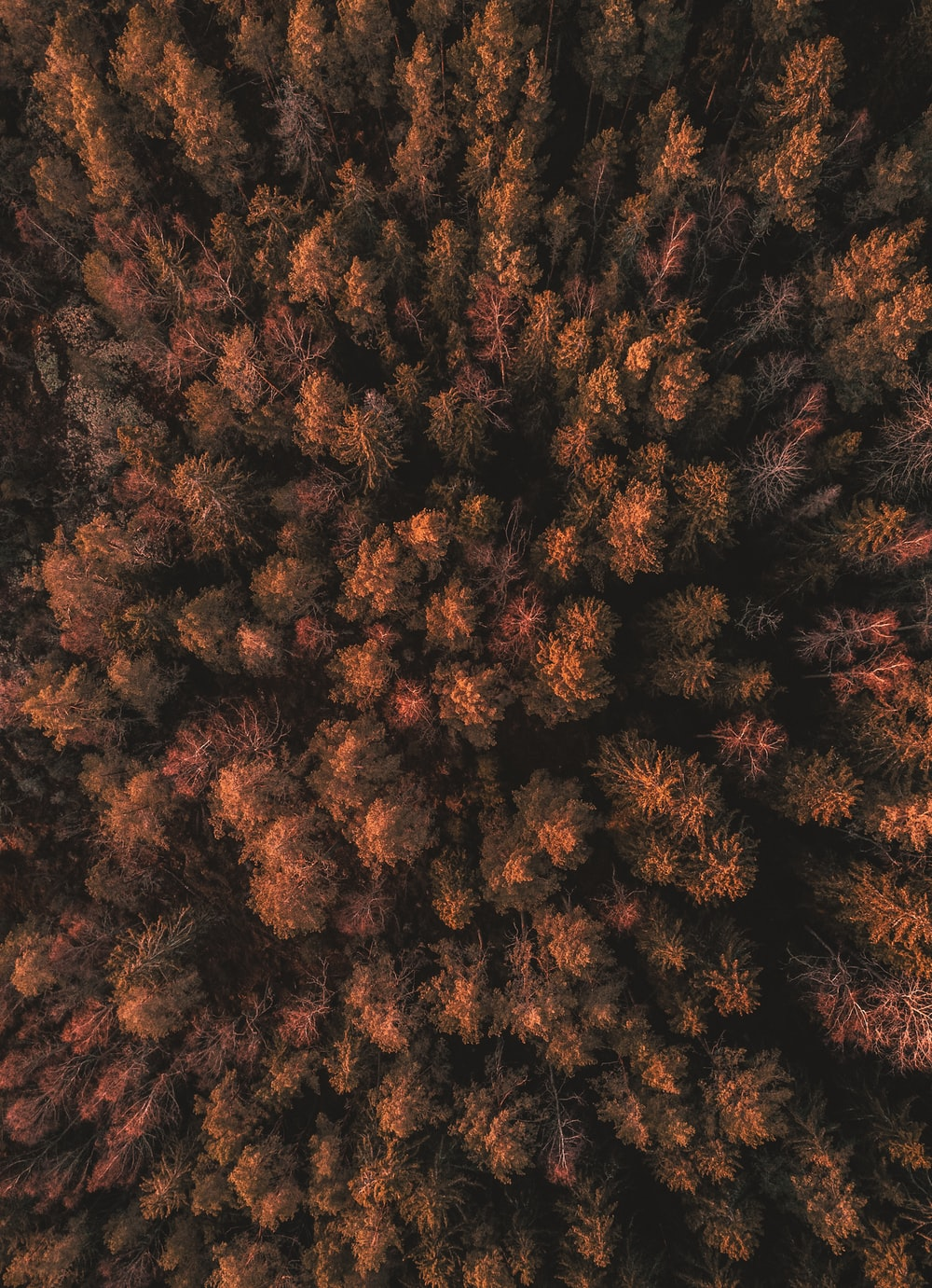 aerial photography of brown forest