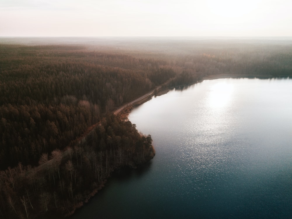 aerial photo of ocean and trees