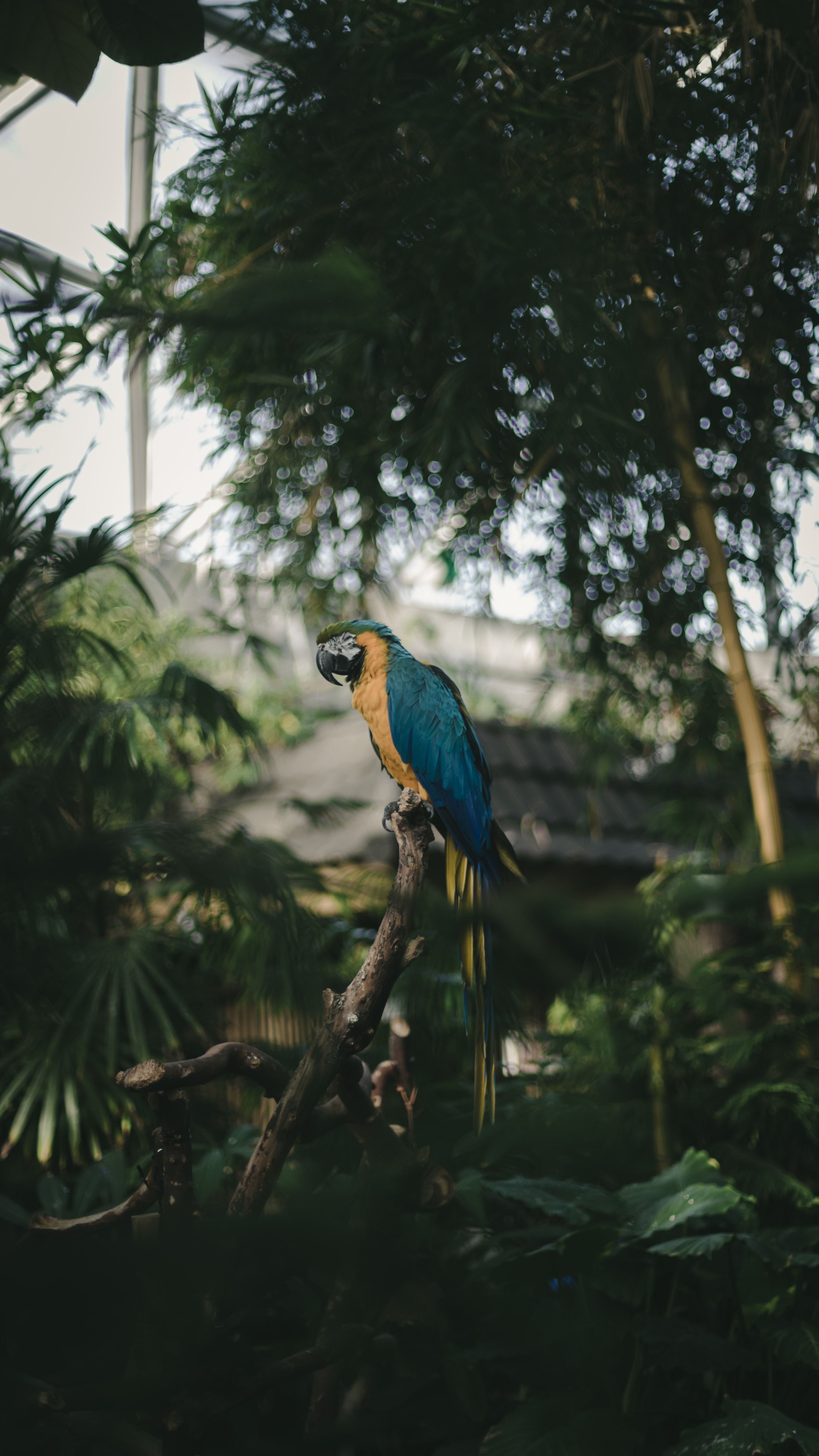 selective focus photography of blue macaw perching on tree branch