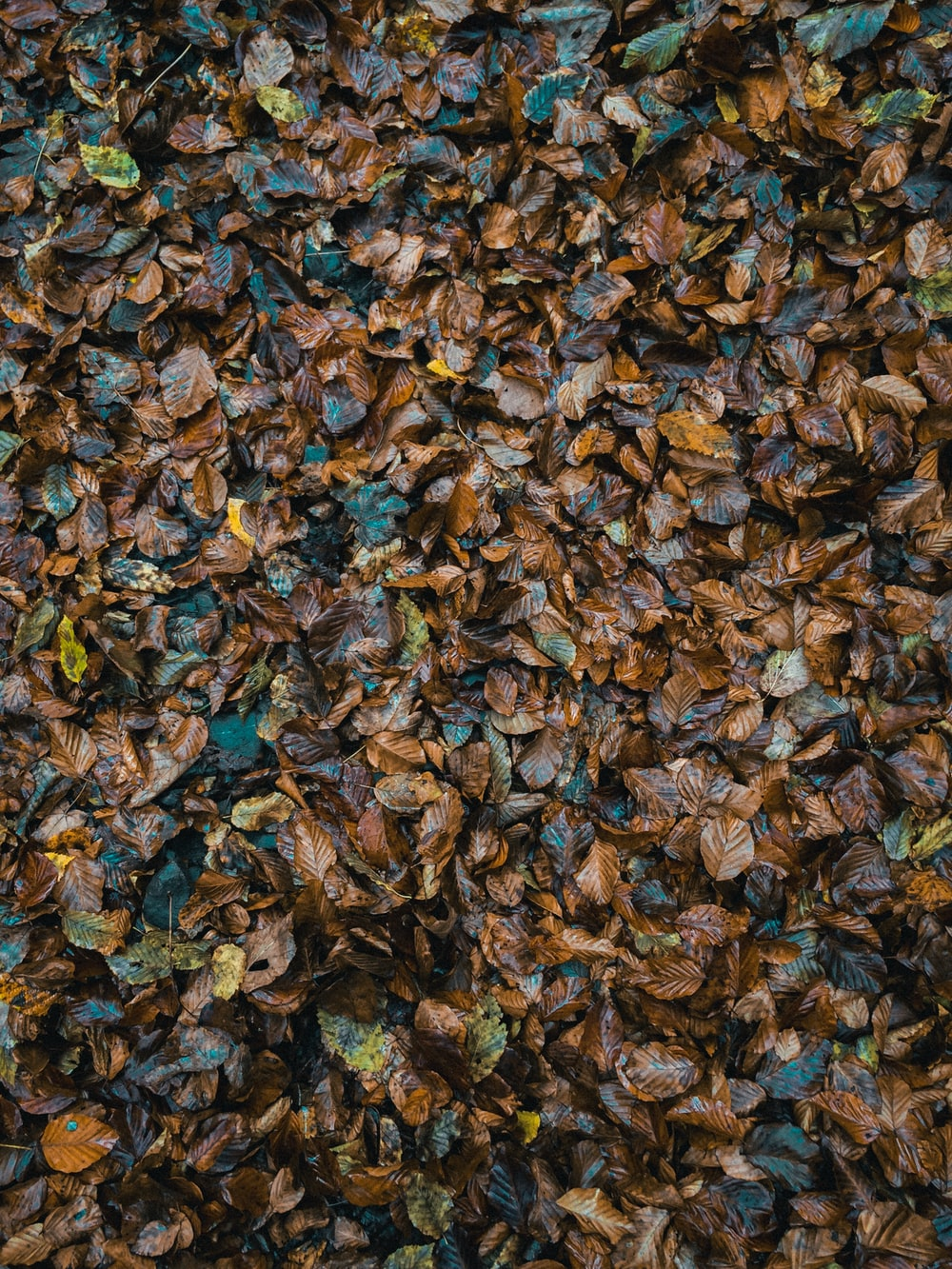 aerial view photography of brown leaves