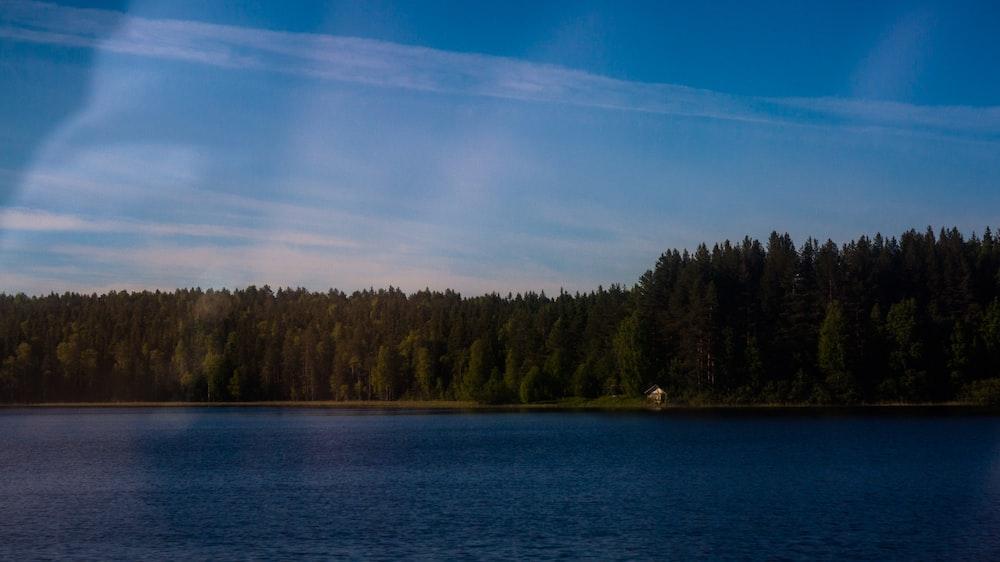 green Evergreen trees near blue body of water