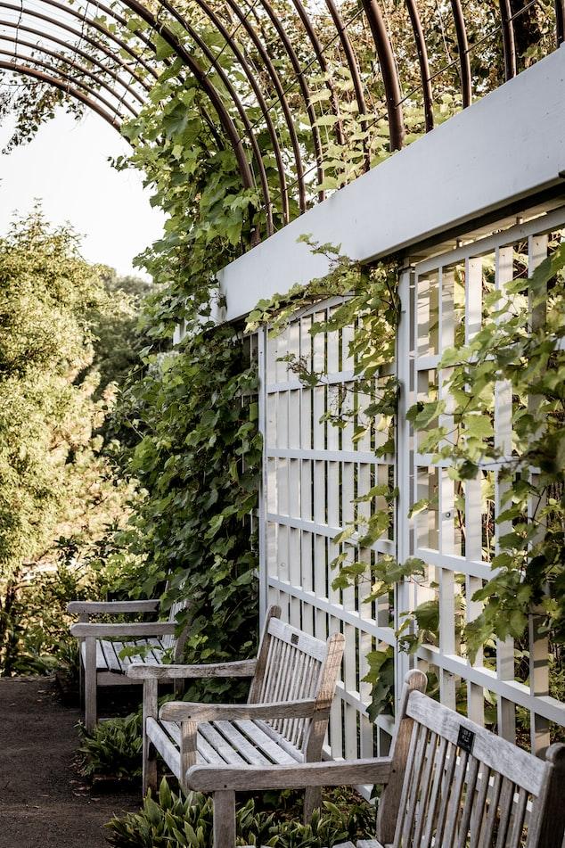 Trellising | How To Make Sturdy Garden Vine Supports