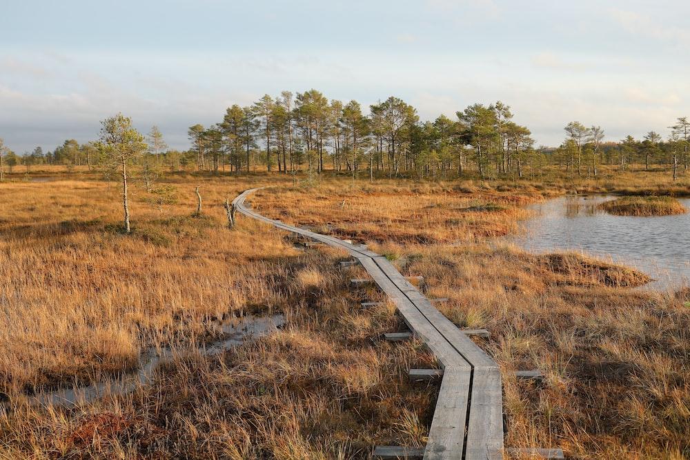 wooden pavement on grass field near lake at daytime