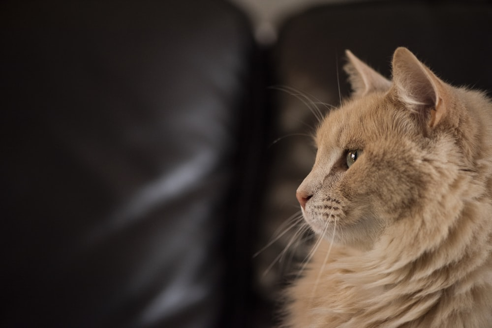 brown cat sitting on sofa
