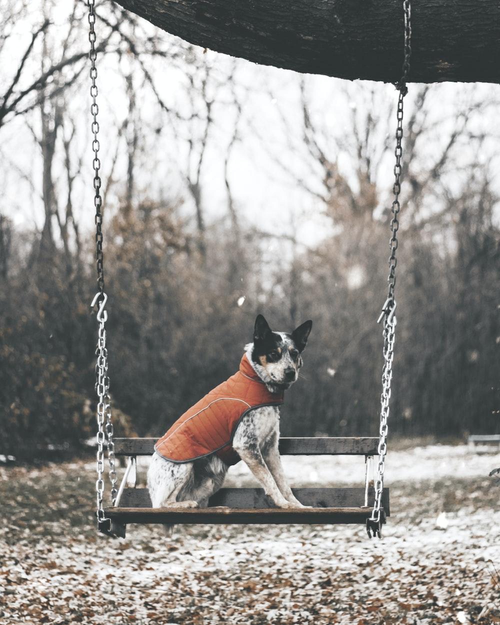 white and black dog swinging