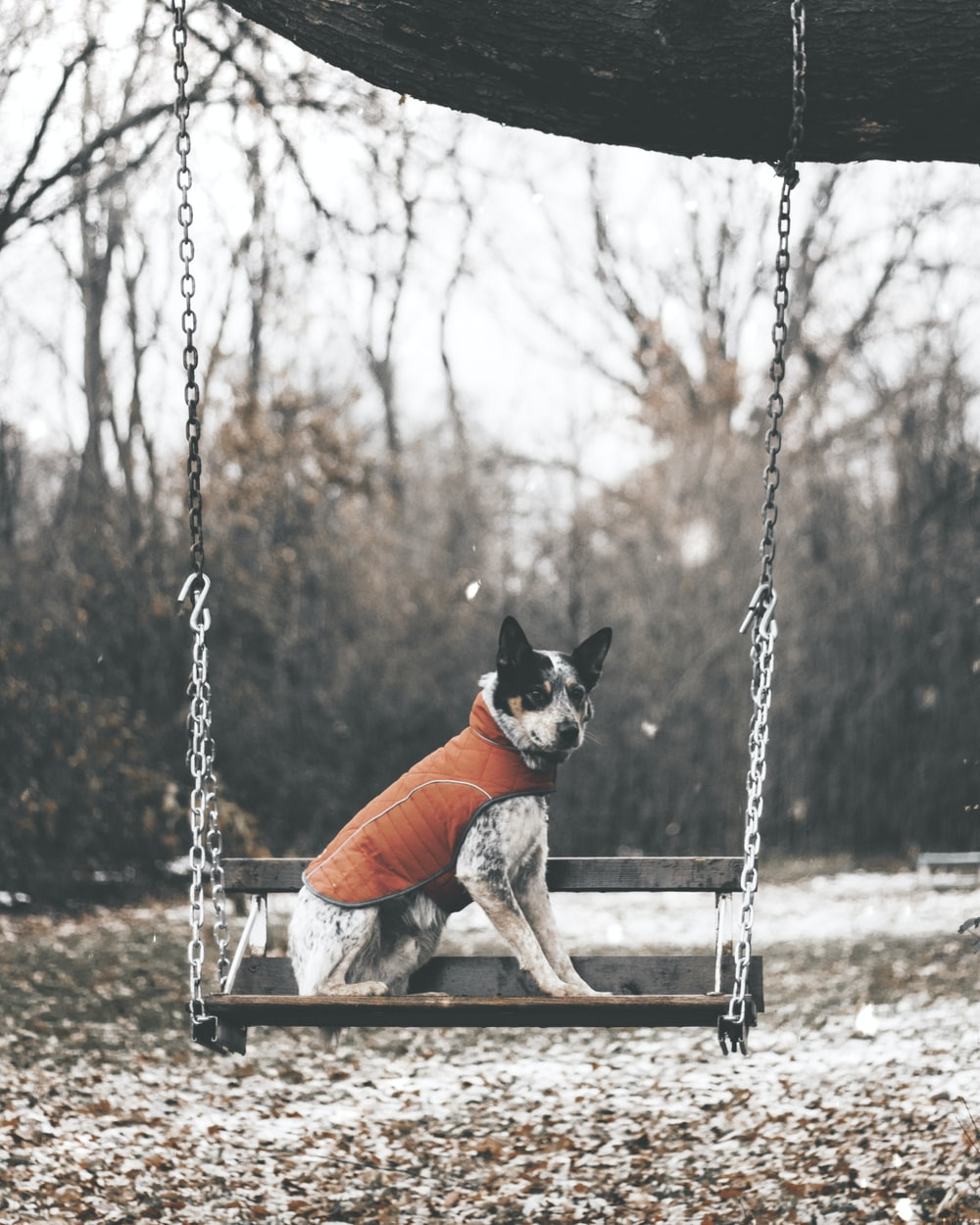 white and black dog swinging