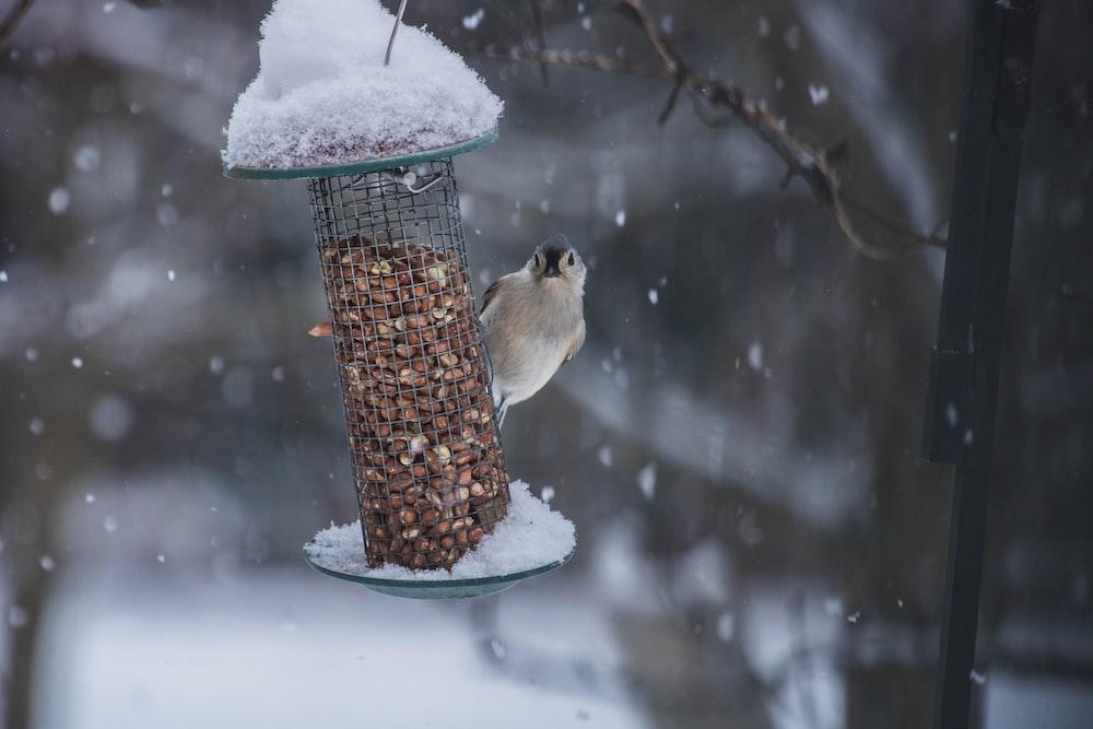 gray passerine bird perching on gray metal birdfeeder selective focus photography