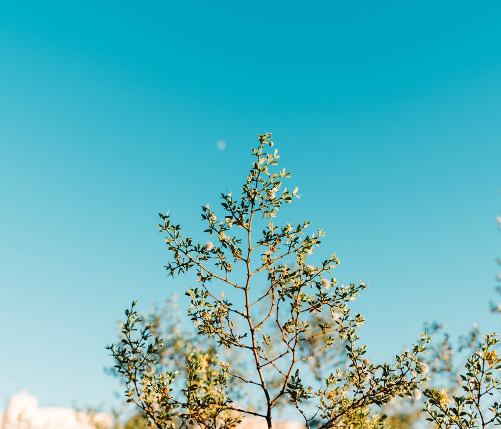 selective focus photography of green-leafed tree