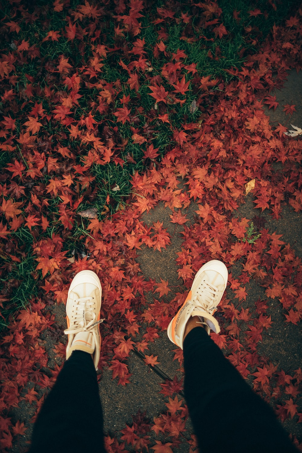 person standing on pavement with maple leaves on ground