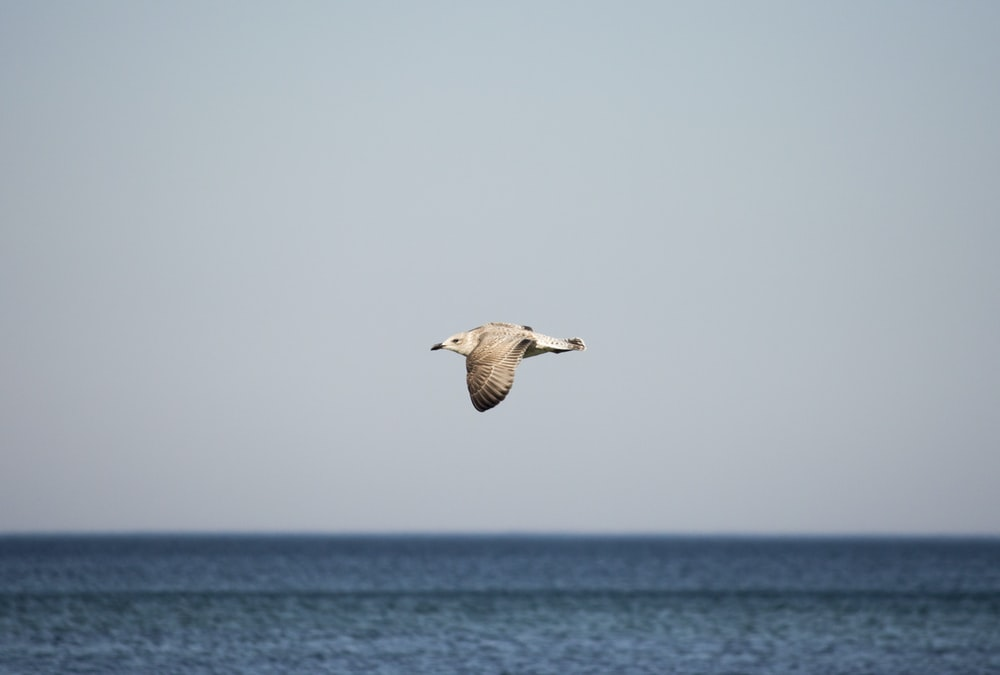 selective focus photography of gull flying during daytime