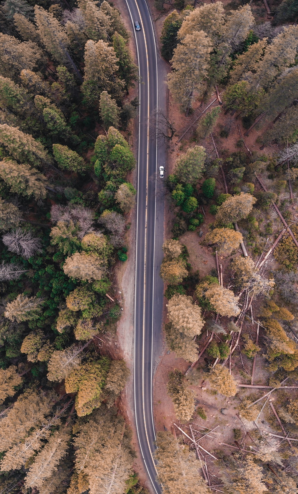 bird's eye view photo of road in the middle of forest