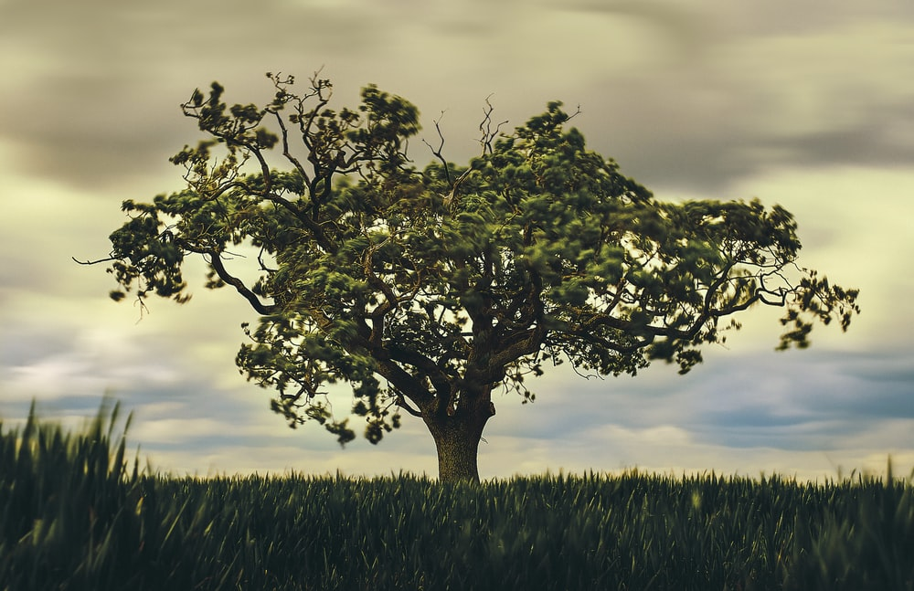 green tree under gray clouds during daytime