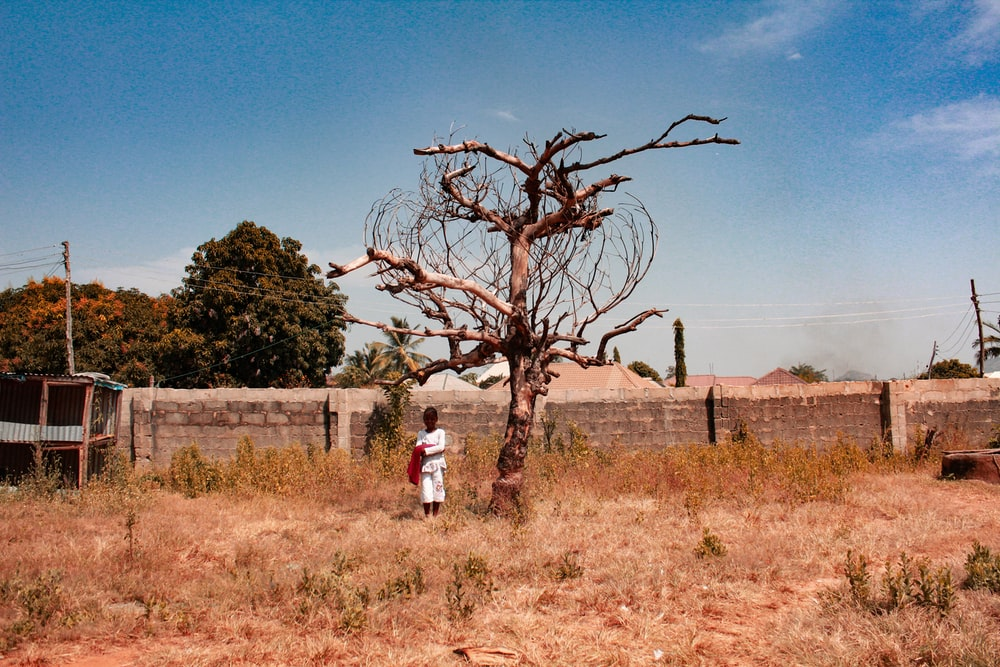boy standing near bare-tree during daytime