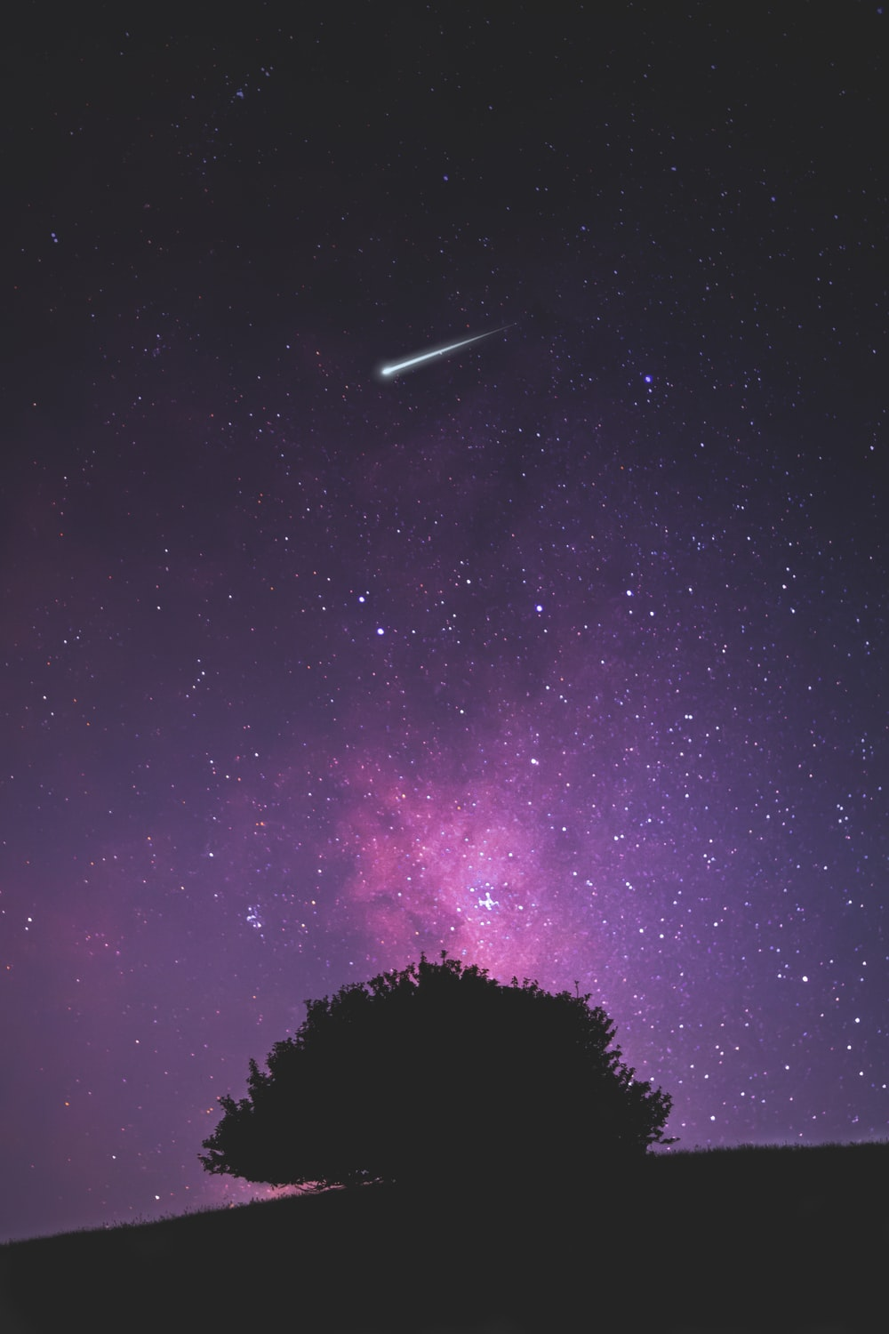 silhouette of tree under purple sky with shooting star at nighttime