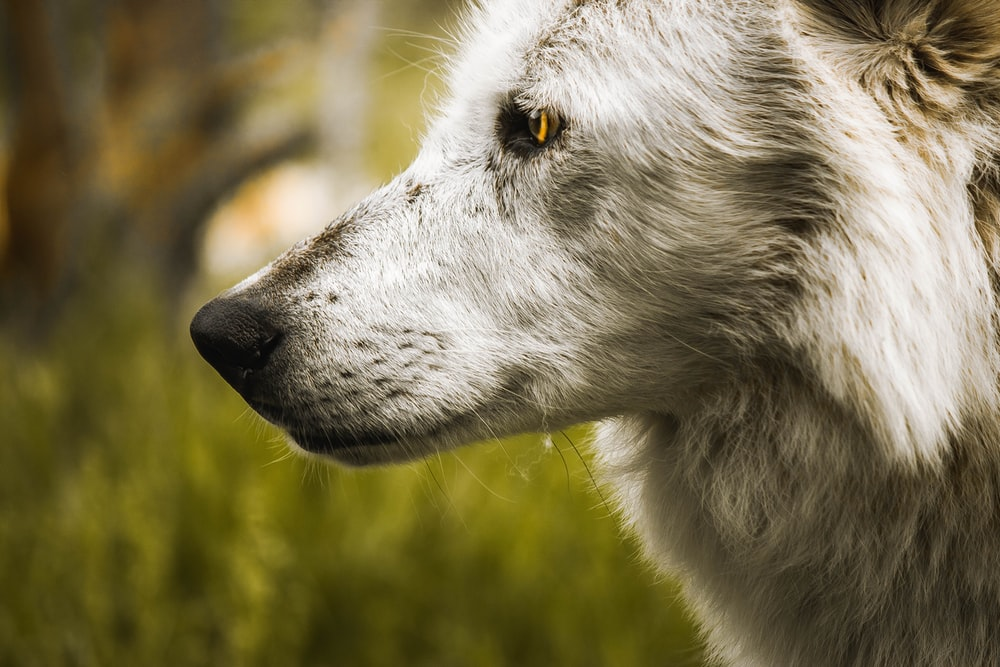 selective focus photography of gray dog